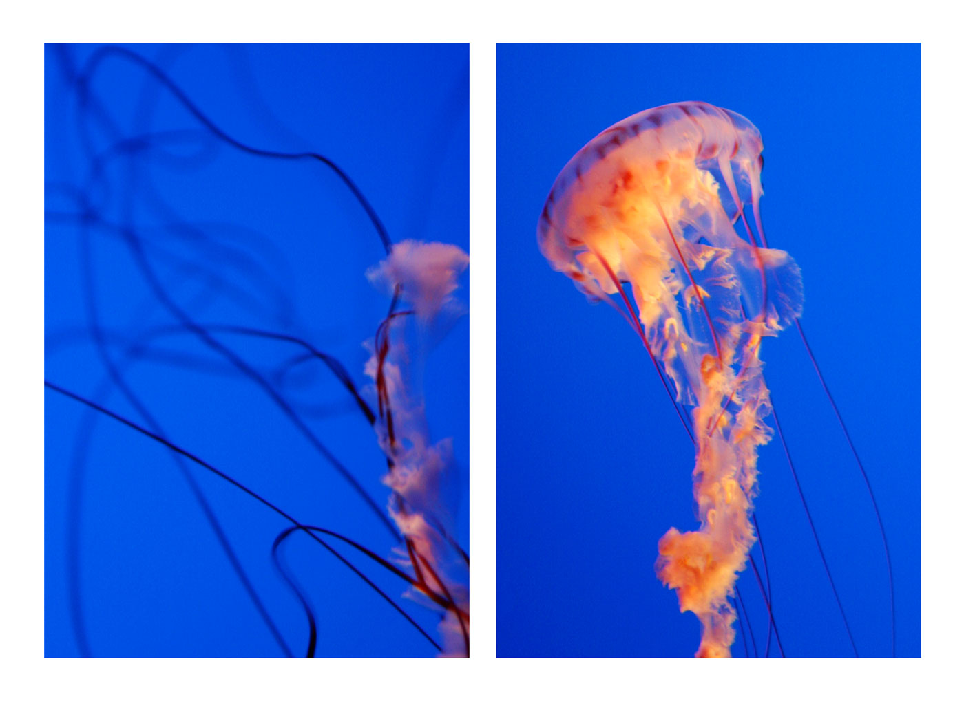 Jellyfish_spread-web2016.jpg