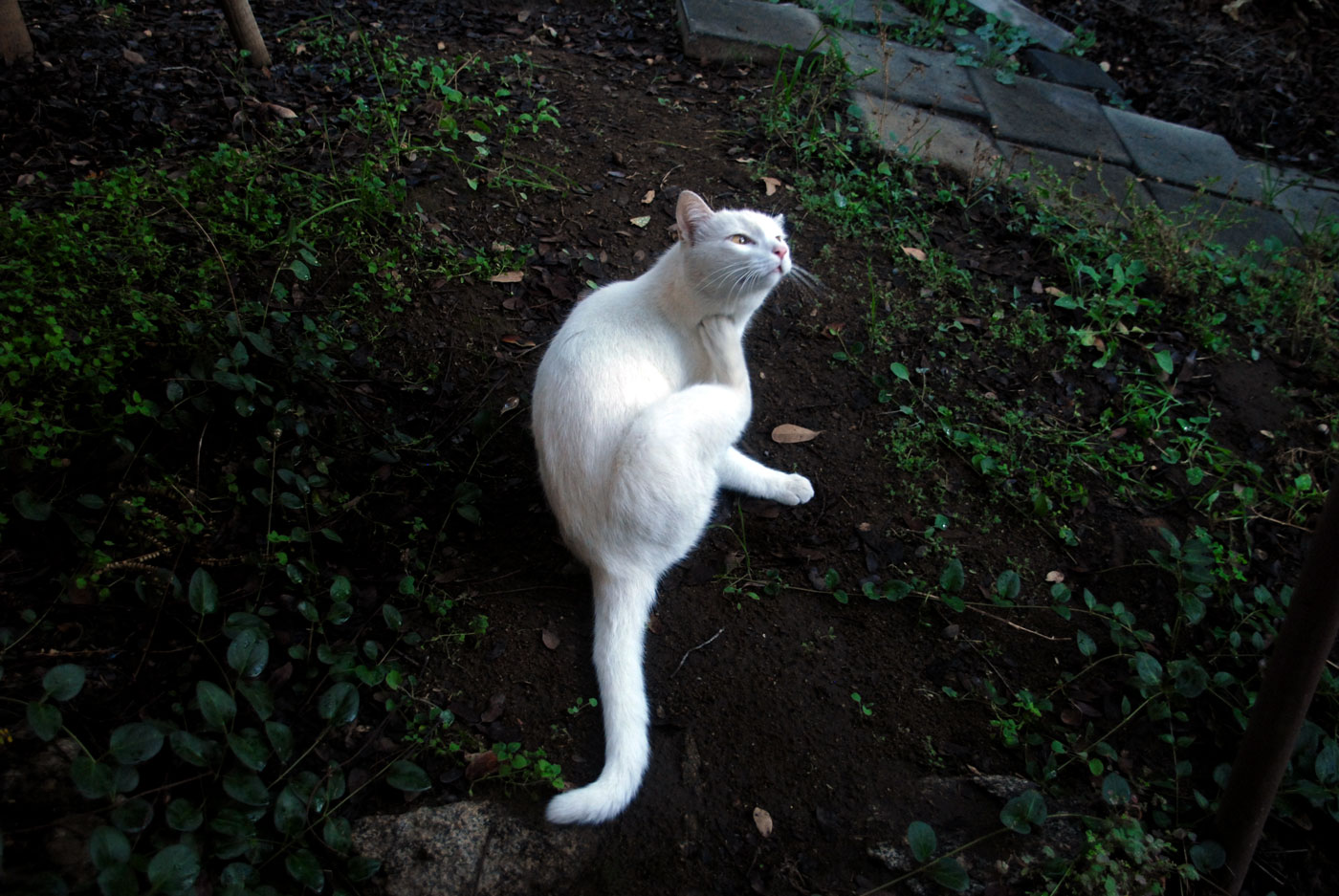 WhiteKitty_web2016.jpg