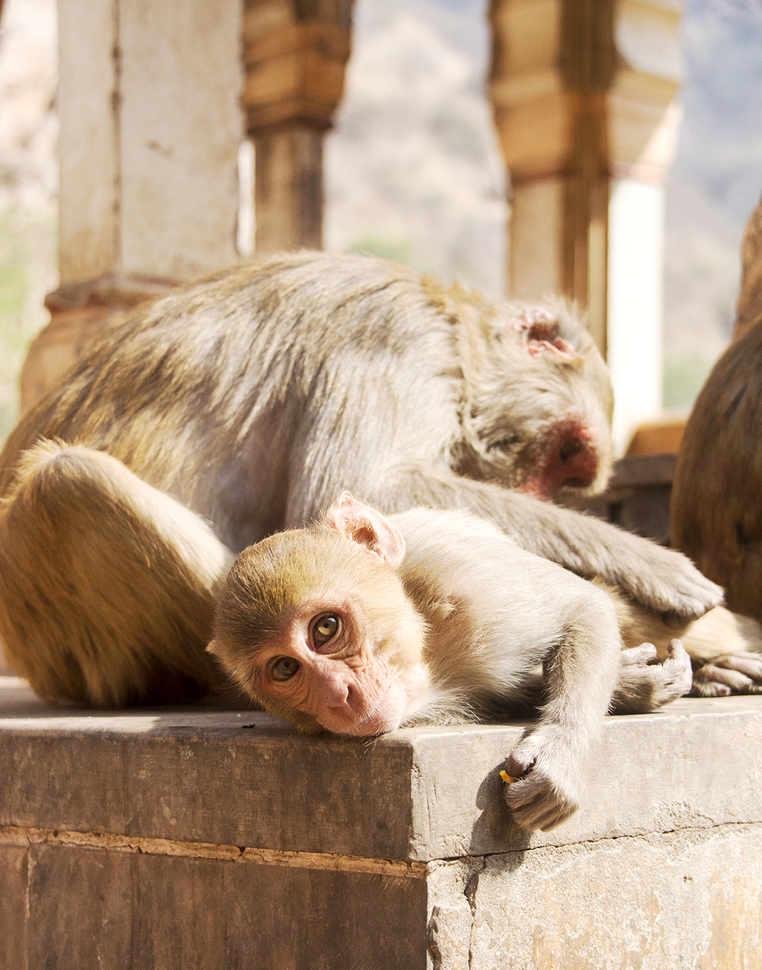 Monkey_Temple_grooming_web2019.jpg