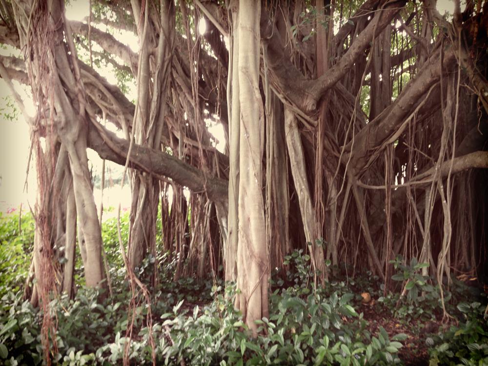 giant-tree.jpg