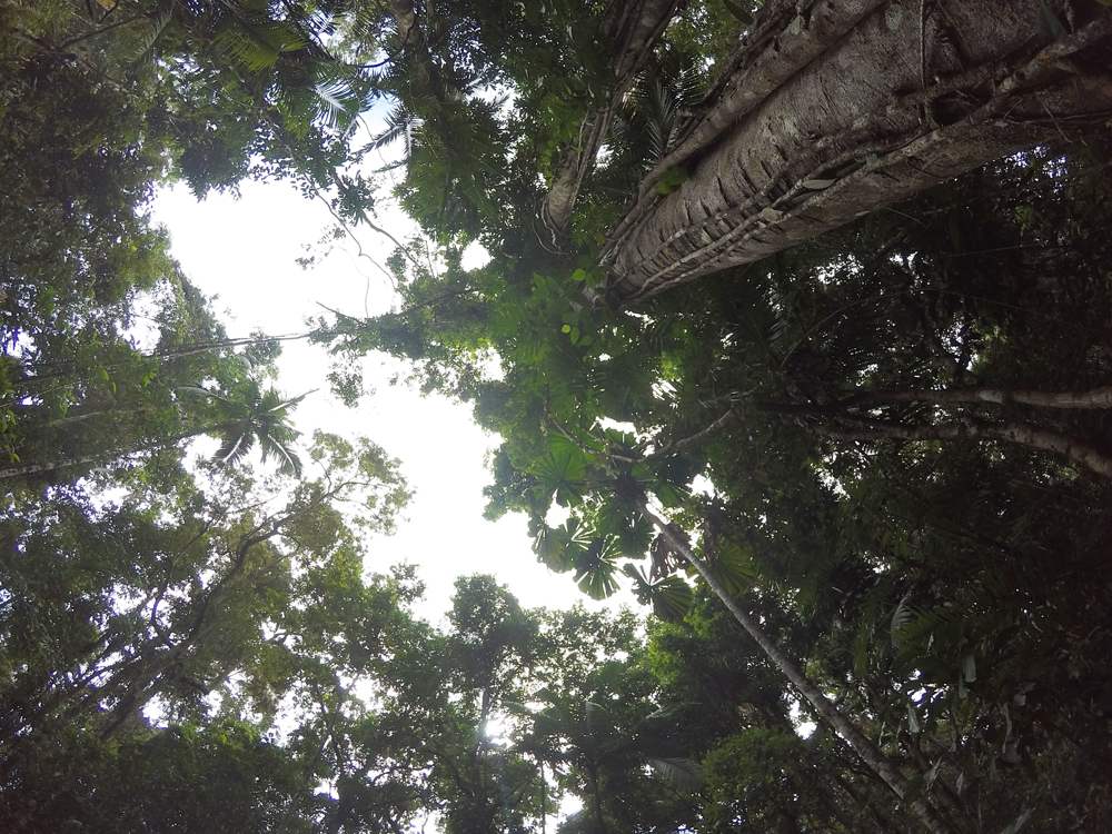 The canopy at Dubuji