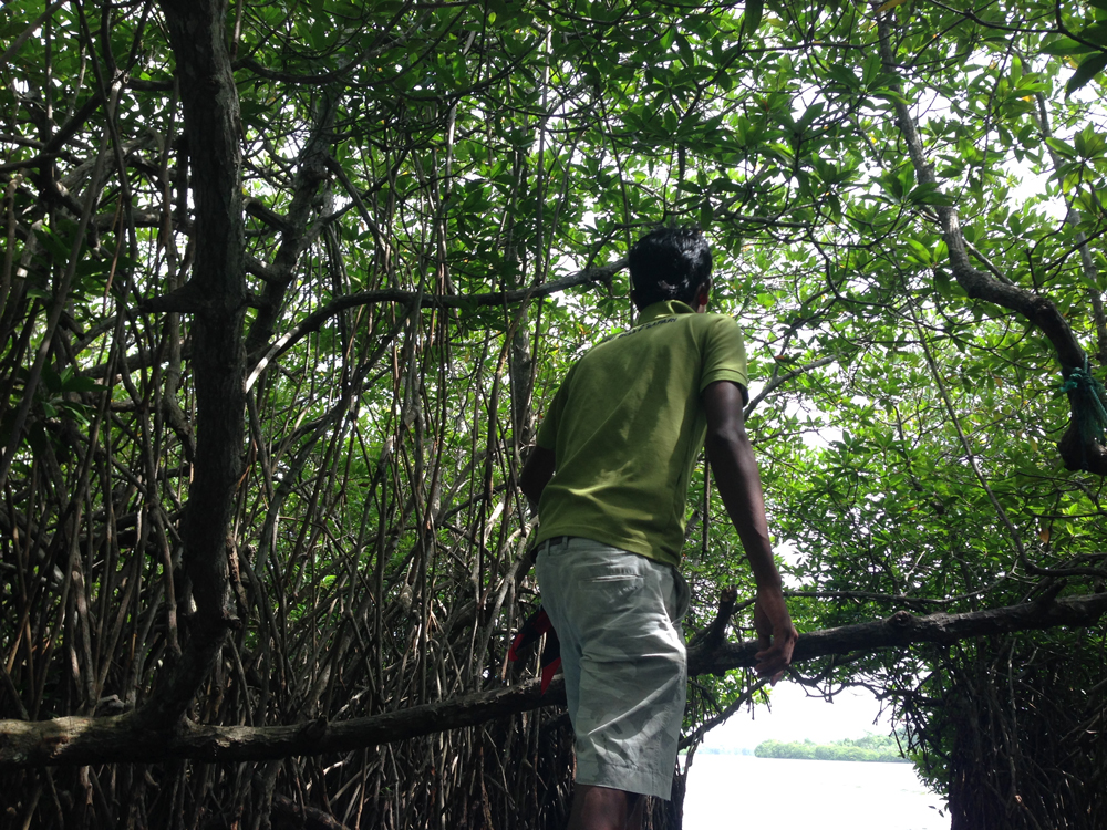 Guiding us through the mangroves