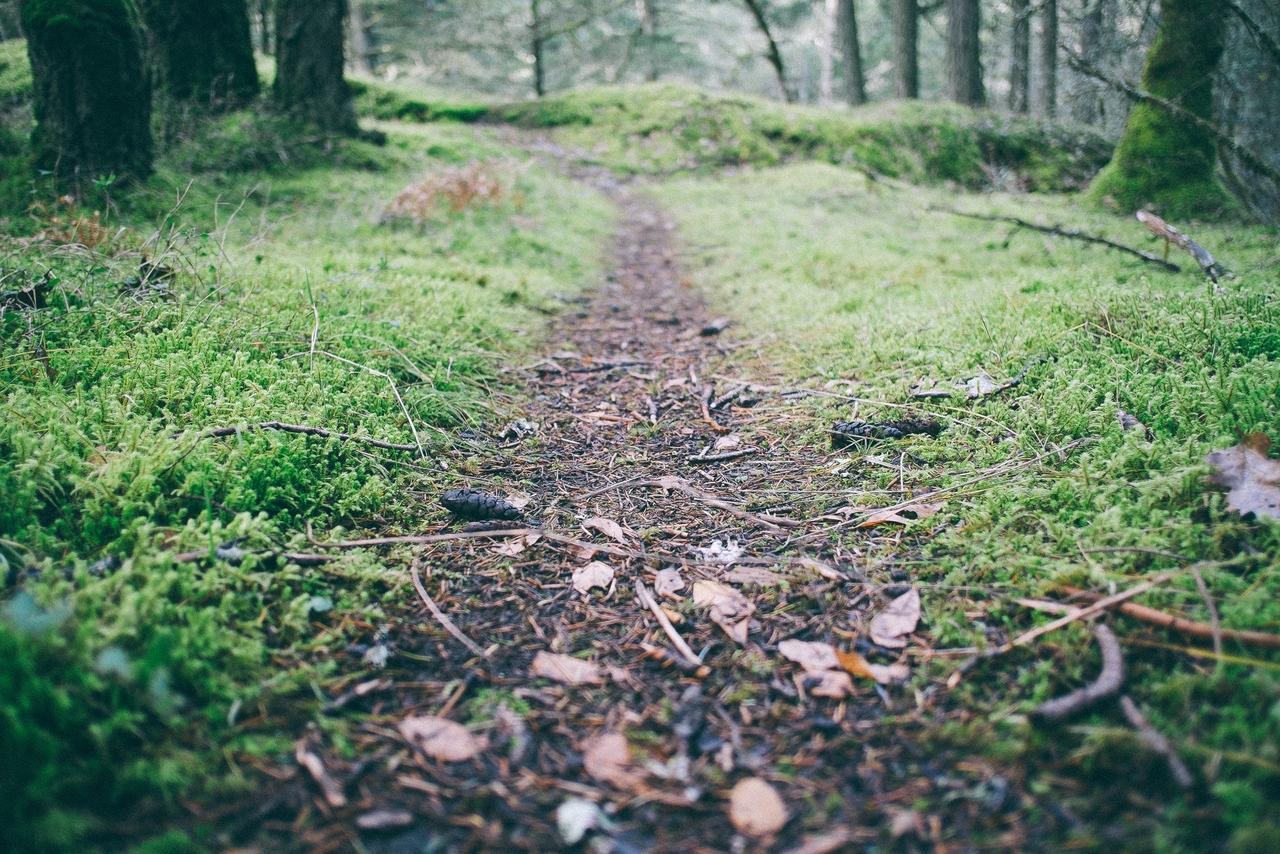 The Narrow Way Of Salvation