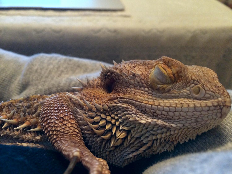 sleepingFluffy.jpg