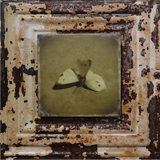 White Butterfy Wedding by Julie Brokken