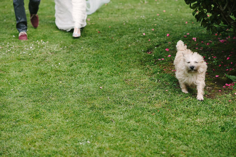 048+Dog+wedding+photobomb.jpg