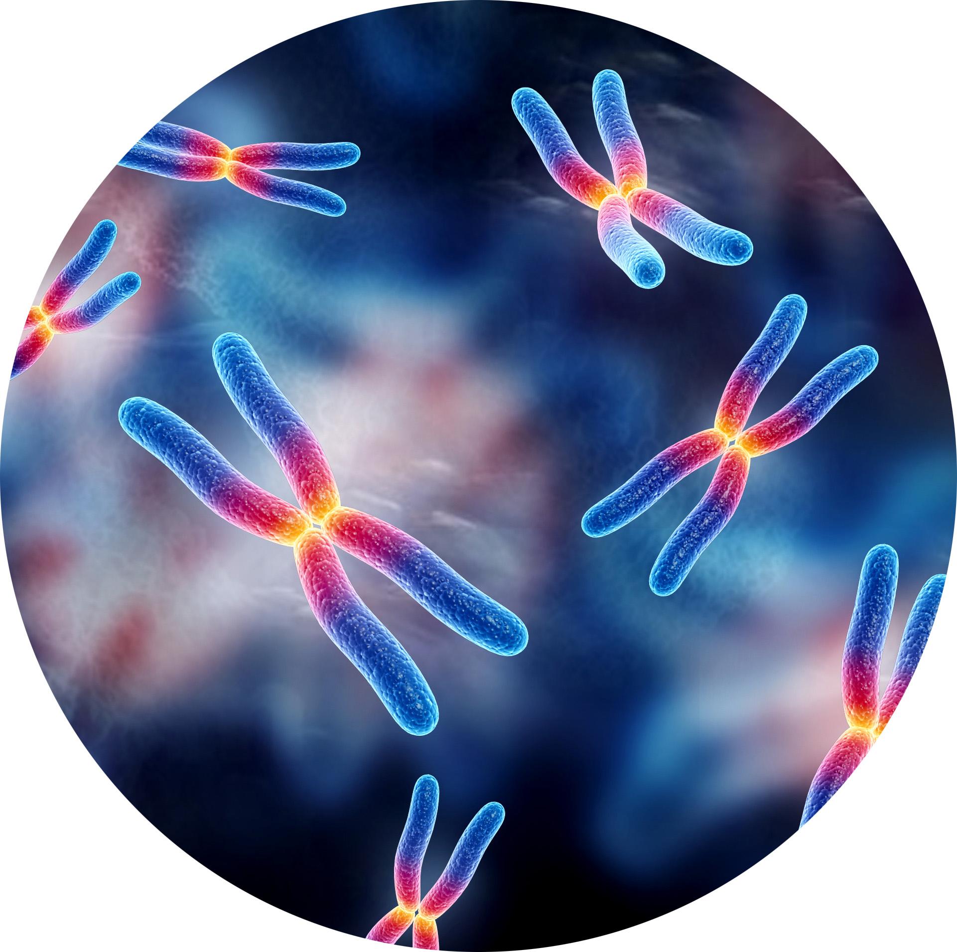 Molecular Medicine and Human Genetics