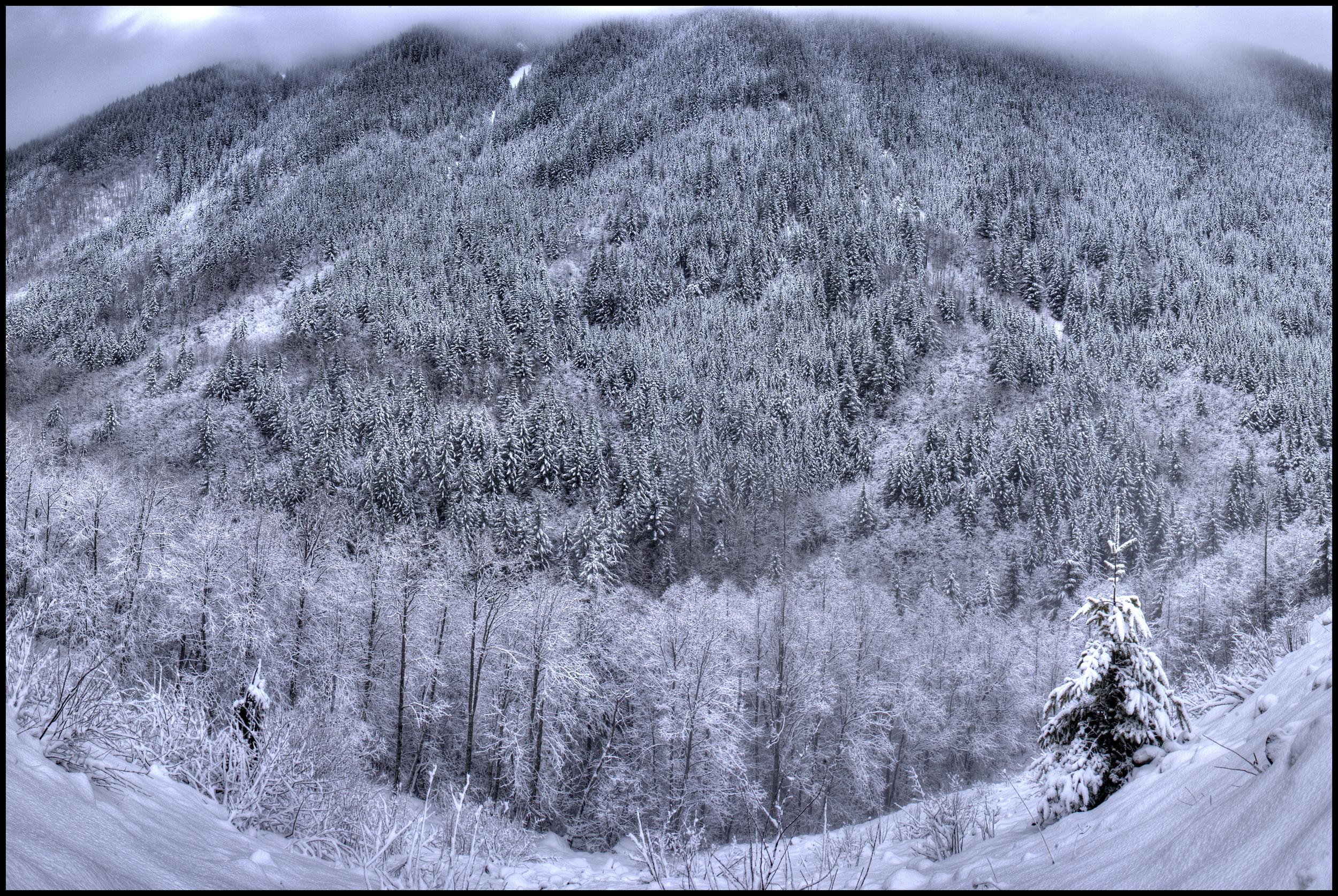 Near Mt. Hood, OR