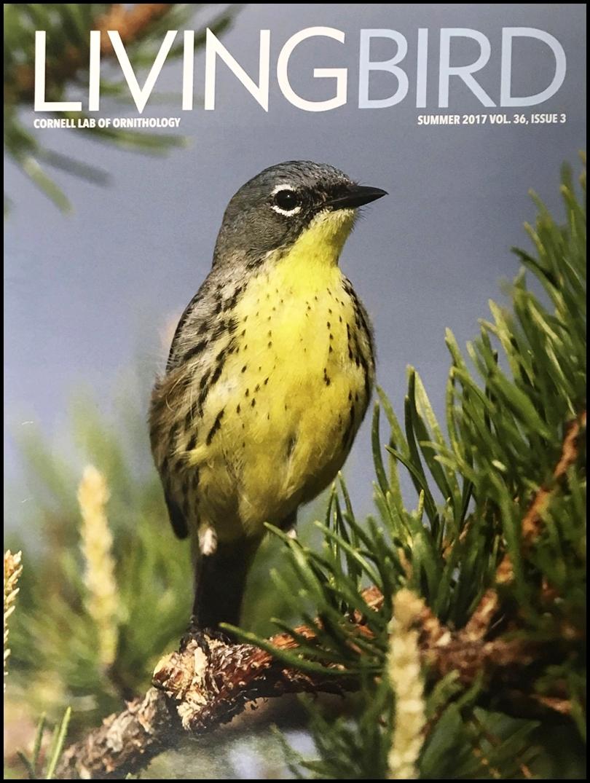 Living Bird.jpg