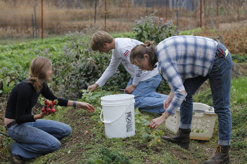 Sewanee's garden gives students a taste of agriculture - Students can study anything at college … and work on a farm between classes.