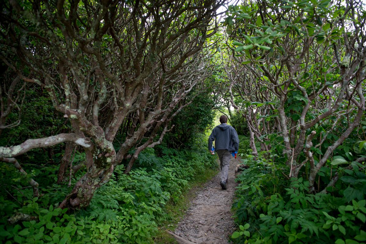 Rhodo tunnel on Craggy gardens Pinnacle Trail
