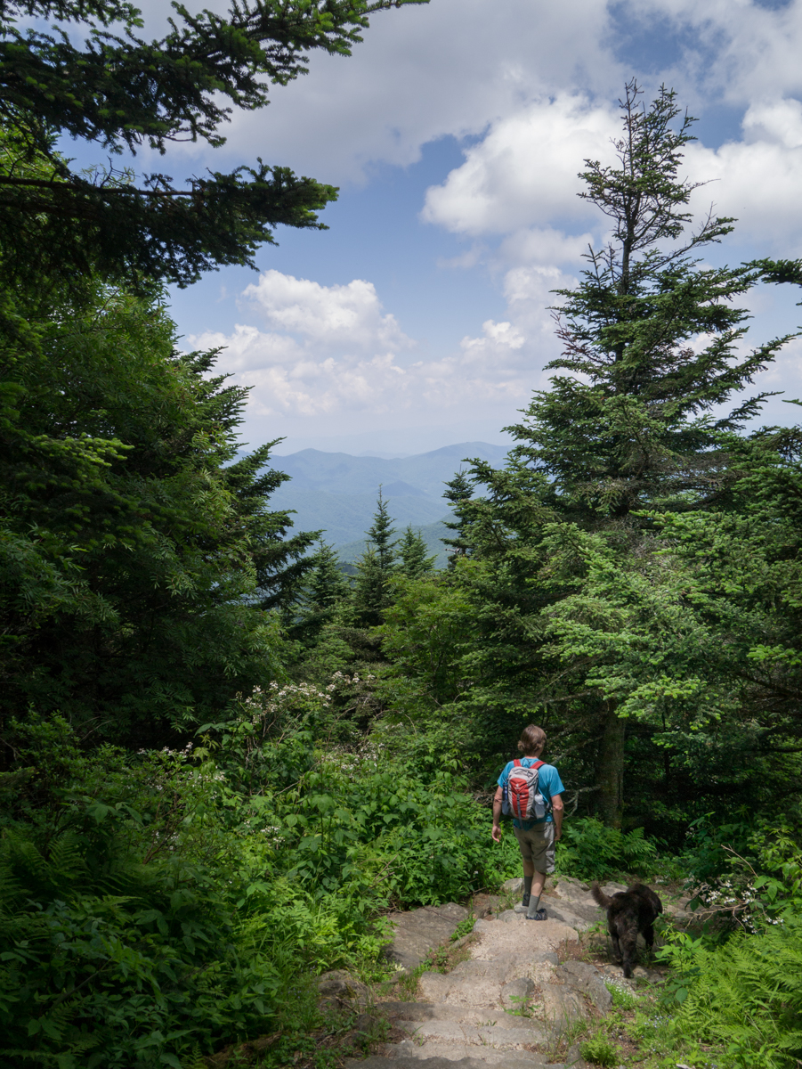 Deep Gap Trail at Mt. Mitchell