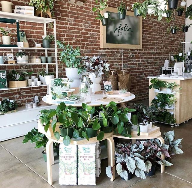 You can NEVER have too many gorgeous plants in your house. So thrilled to have @foliacollective with us again! #succulove #plantsarepeopletoo #nela #plantlover #highlandpark #nela #shopsmallla #shoplocal #plantstagram #thingstodoinla #forthekids #shopsmall