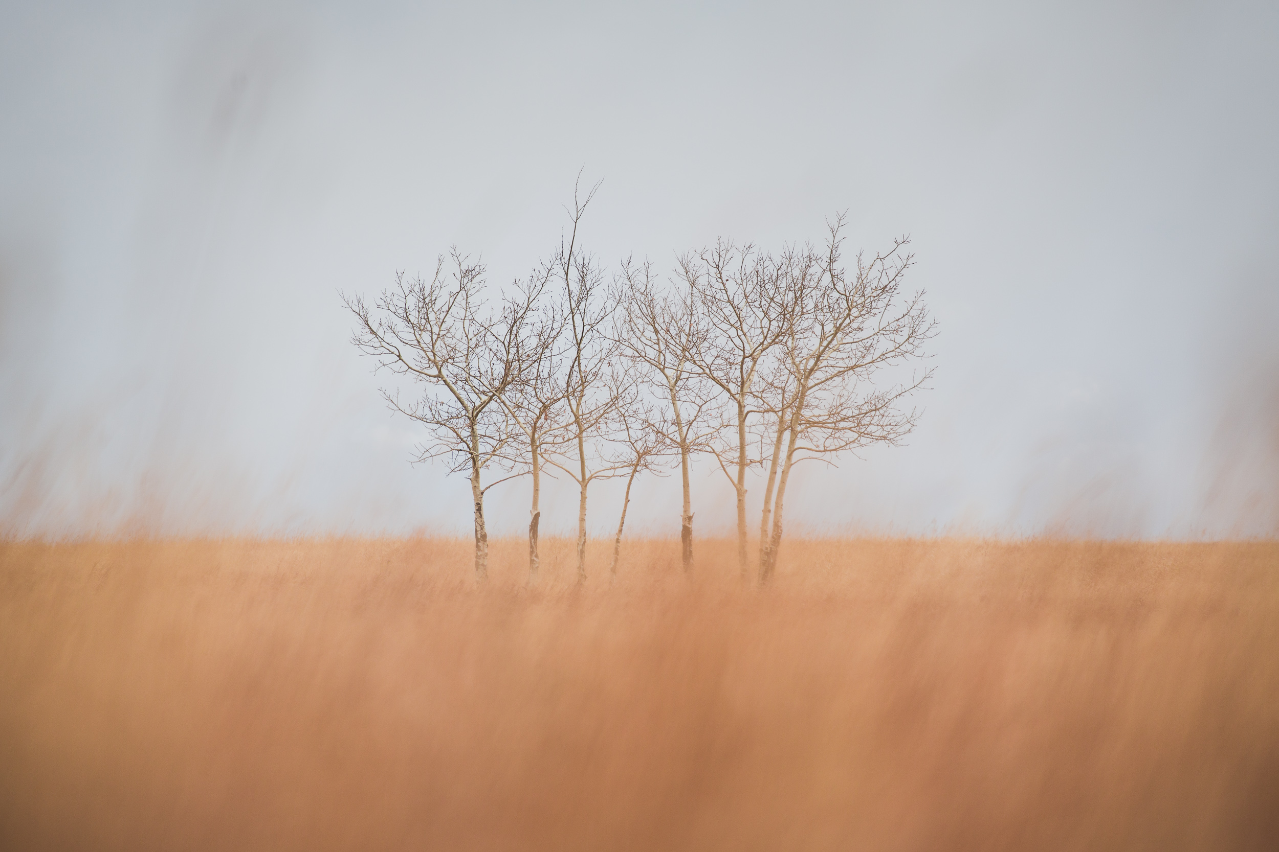 steve_seeley-prarie_trees.jpg