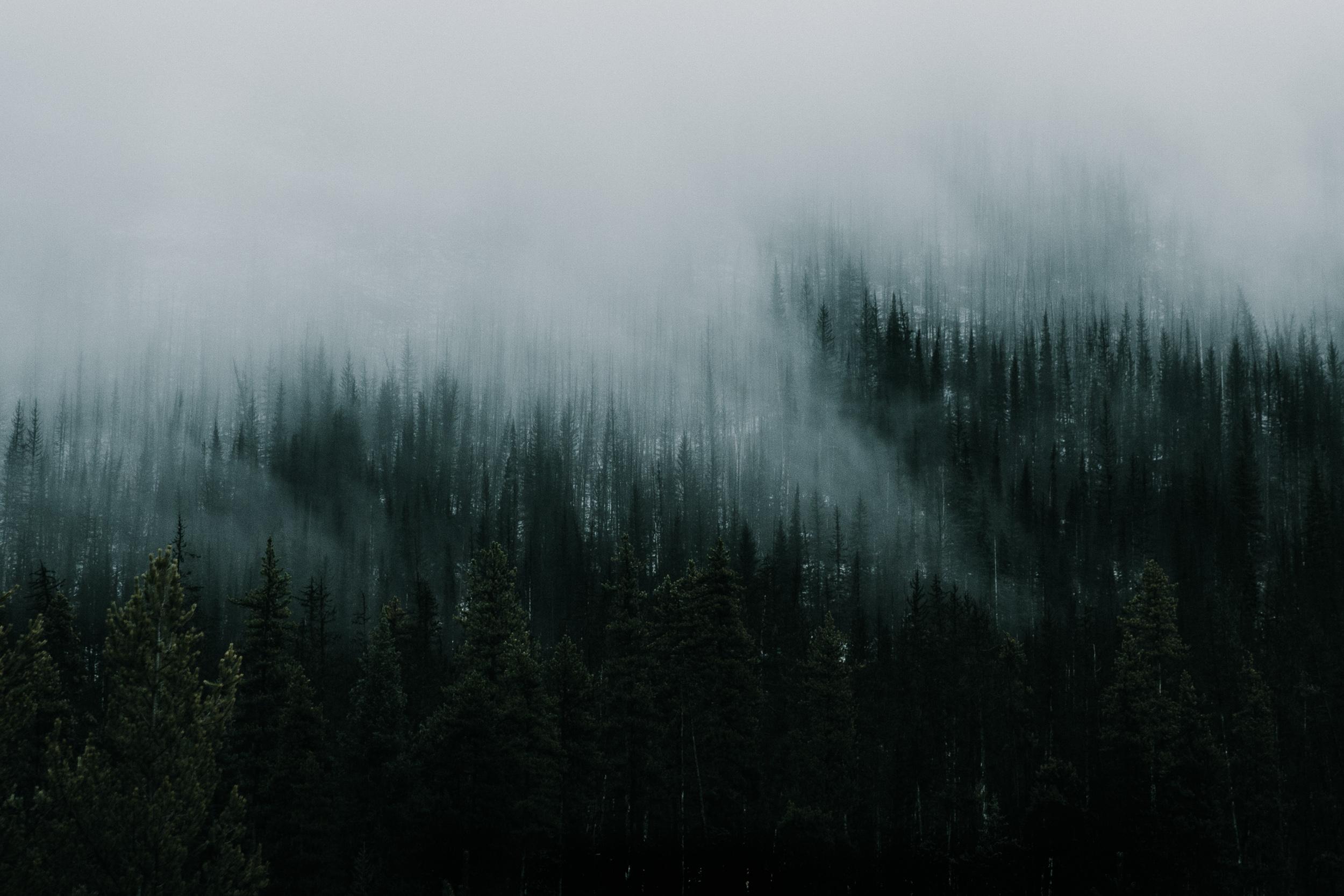 steve_seeley-dark-woods.jpg