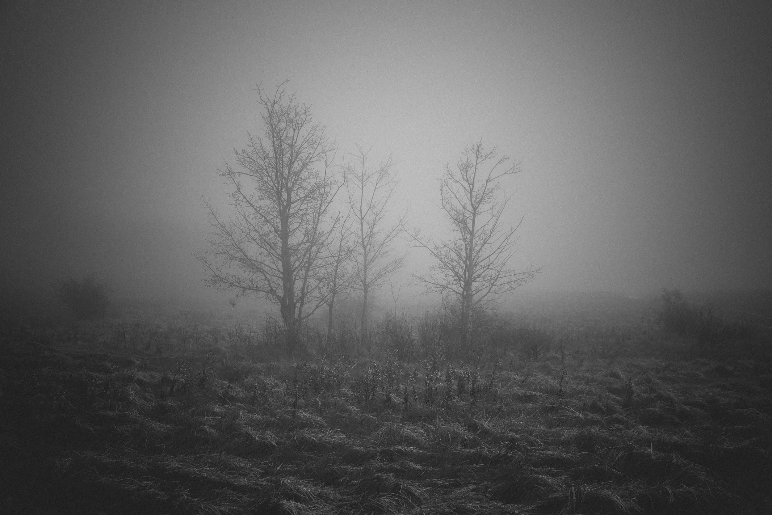 steve_seeley-haze_tree_1.jpg