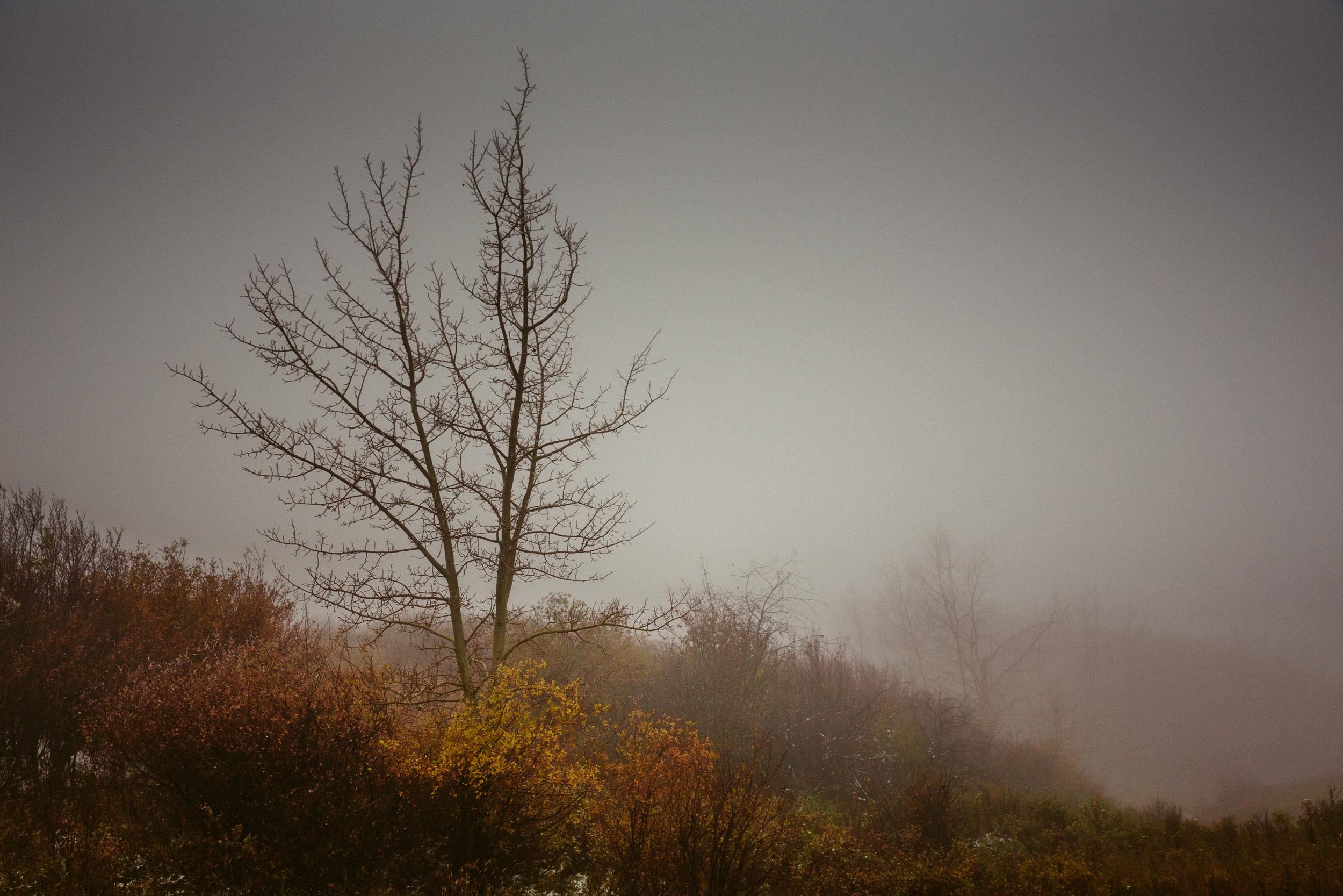 steve_seeley-haze_tree_2.jpg