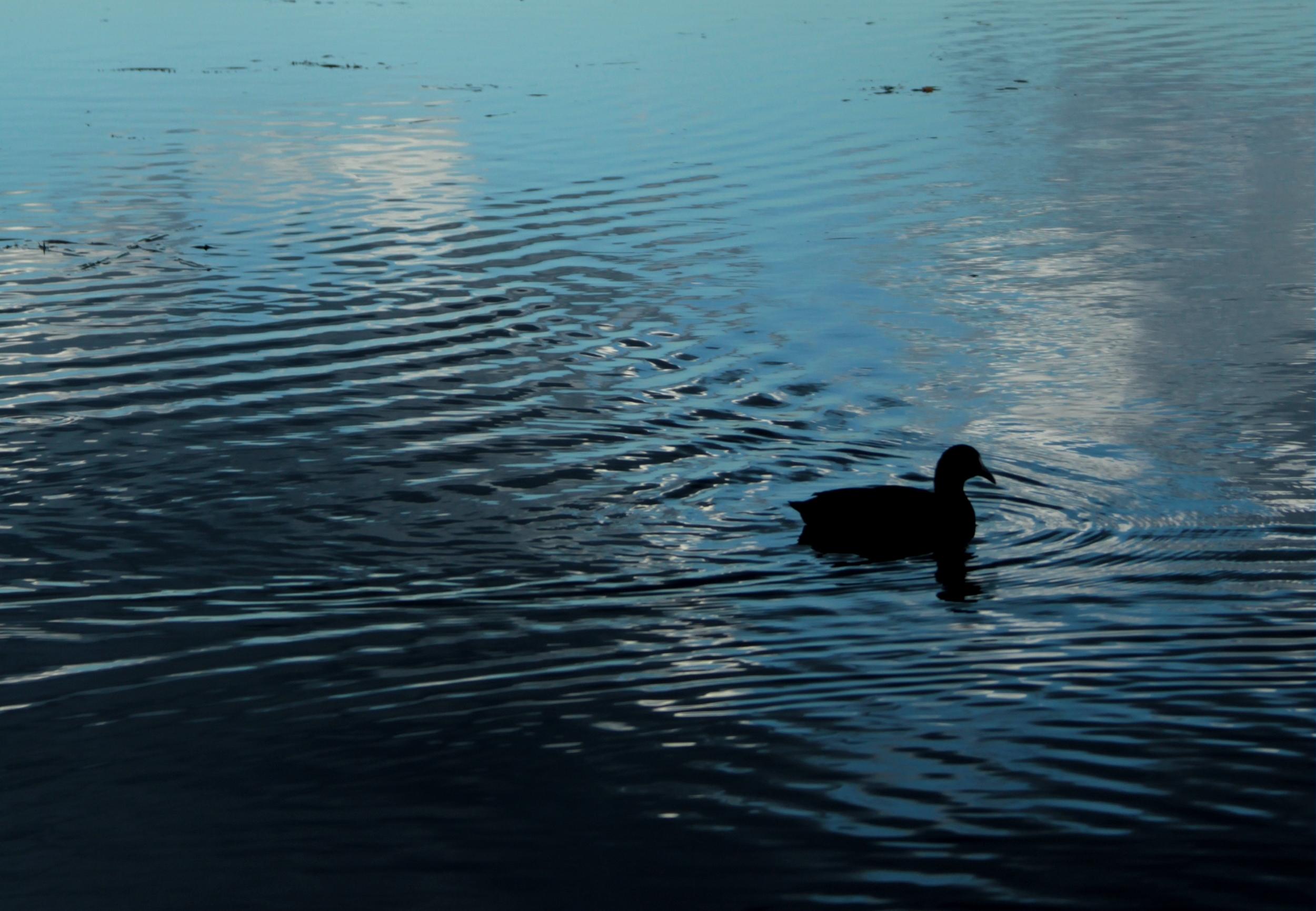 An afternoon swim.
