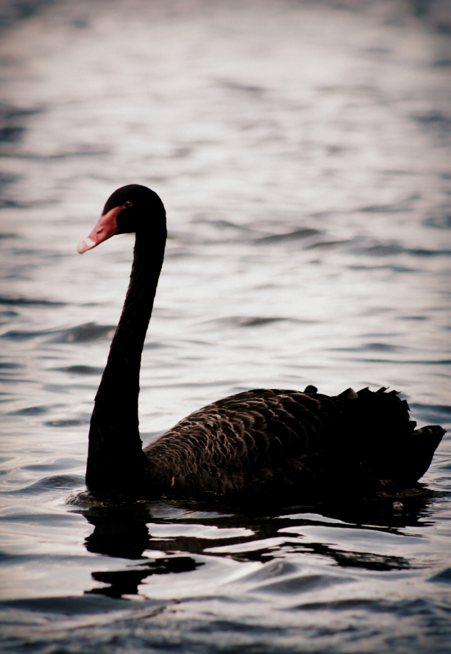 One of the lake's residents.