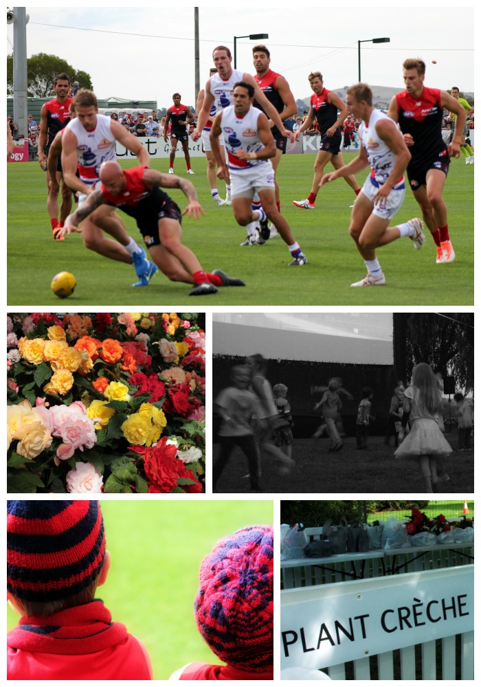 AFL in action. Begonias. Put music videos on and kids will dance: Begonia Festival twilight showing of the Lego Movie. Avid six year old footy fans. Bought plants at the Begonia Festival? Leave them to be cared for a the Plant Chreche :-)