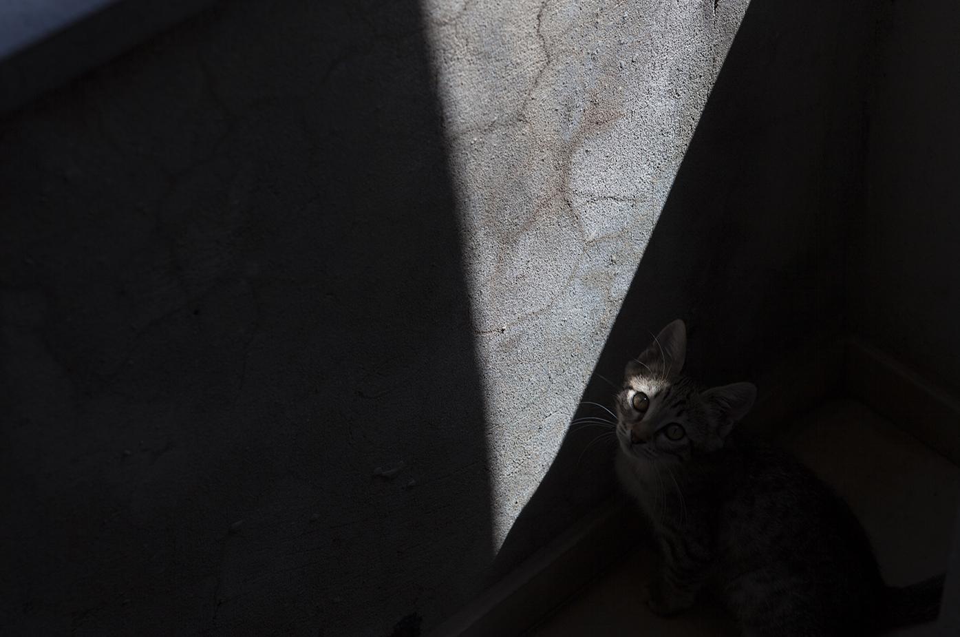 Cat Title