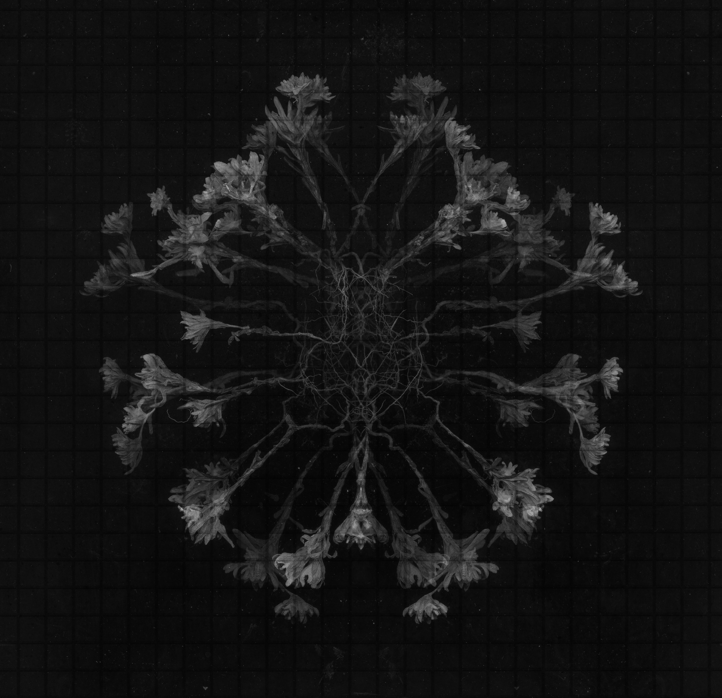 An Ordered Chaos #30 (Neurons), Archival Inkjet Print, 20 by 20 inches, , 2016