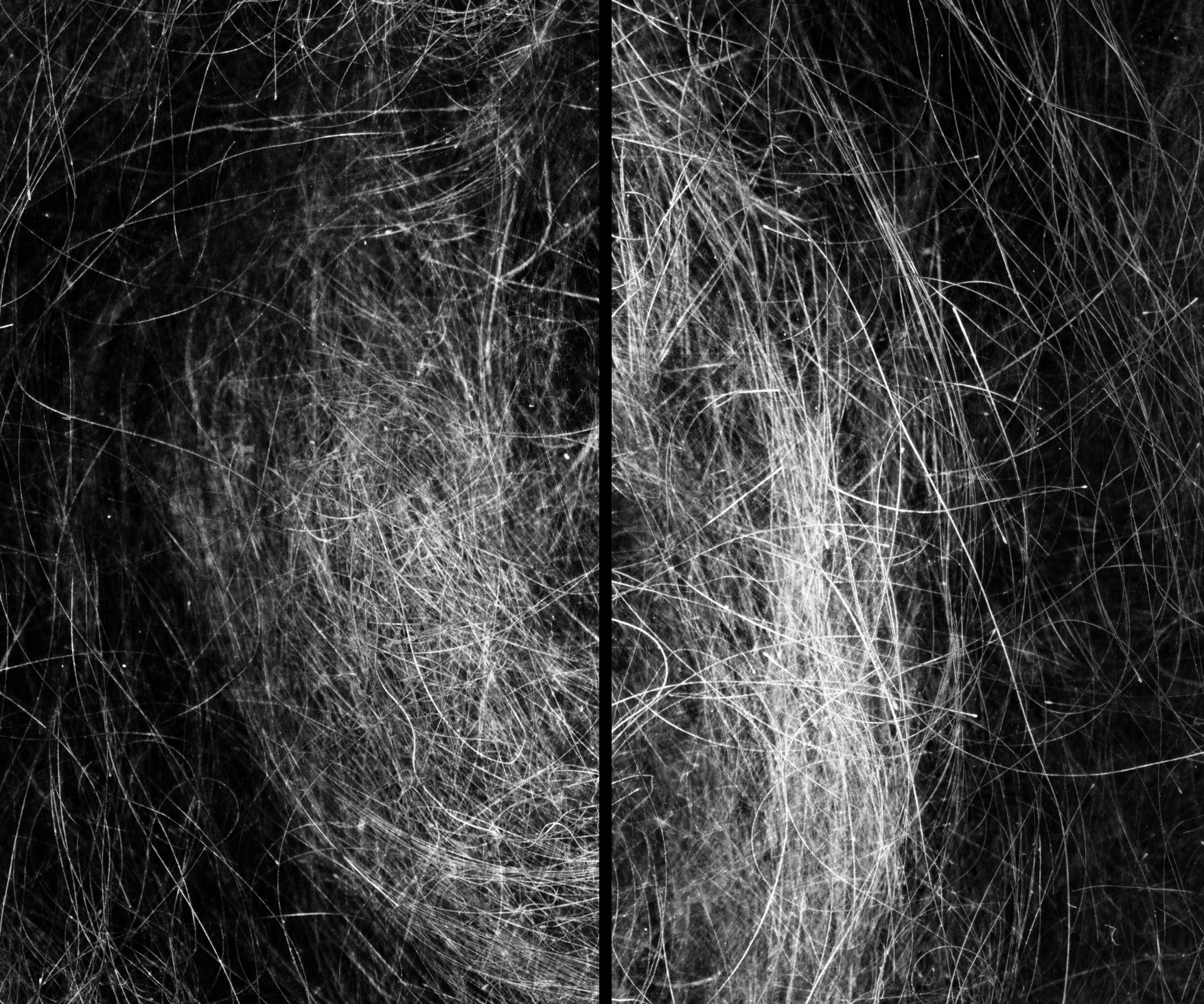An Ordered Chaos #5 (Hair 1), Archival Inkjet Print, 16 by 20 inches, 2016