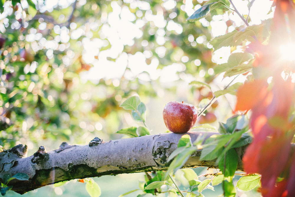 101714-Kings-Brothers-Apple-Orchard-mattrossphotography.com-3.jpg