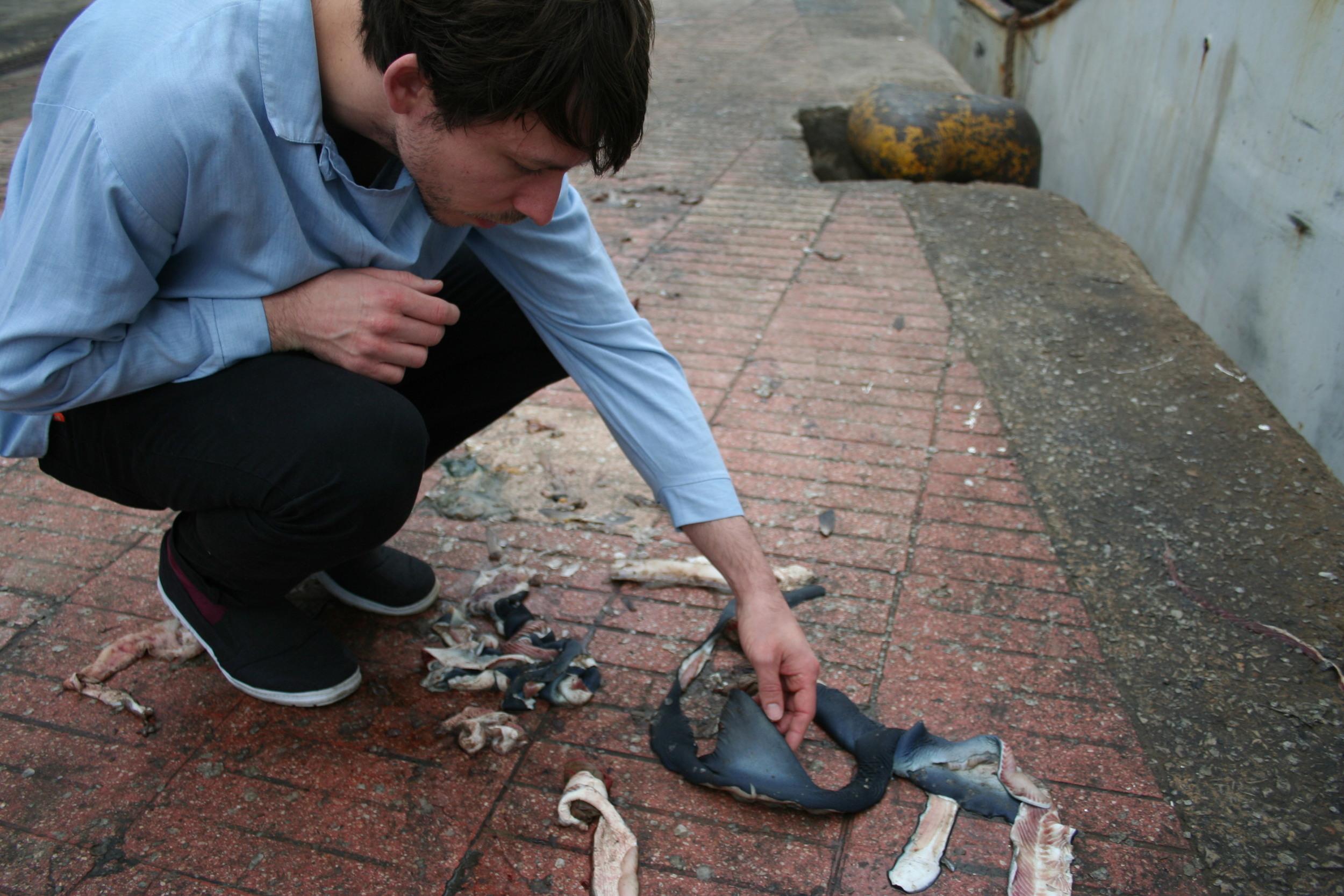 Image by Wietse Van der Werf - Phil inspecting Blue shark remains in Casablanca.