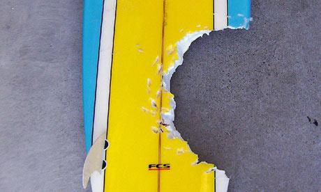 a-surfboard-which-a-bite--001.jpg