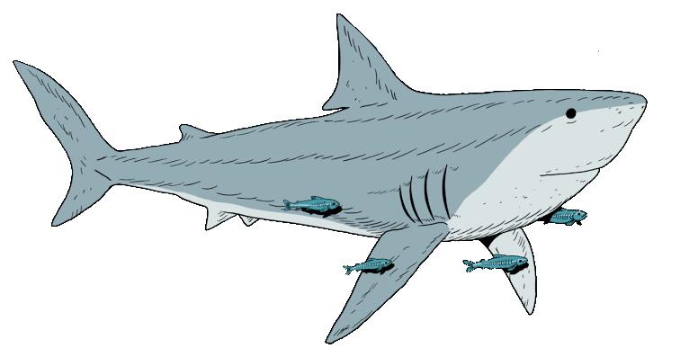 Chad logo full shark crop.png