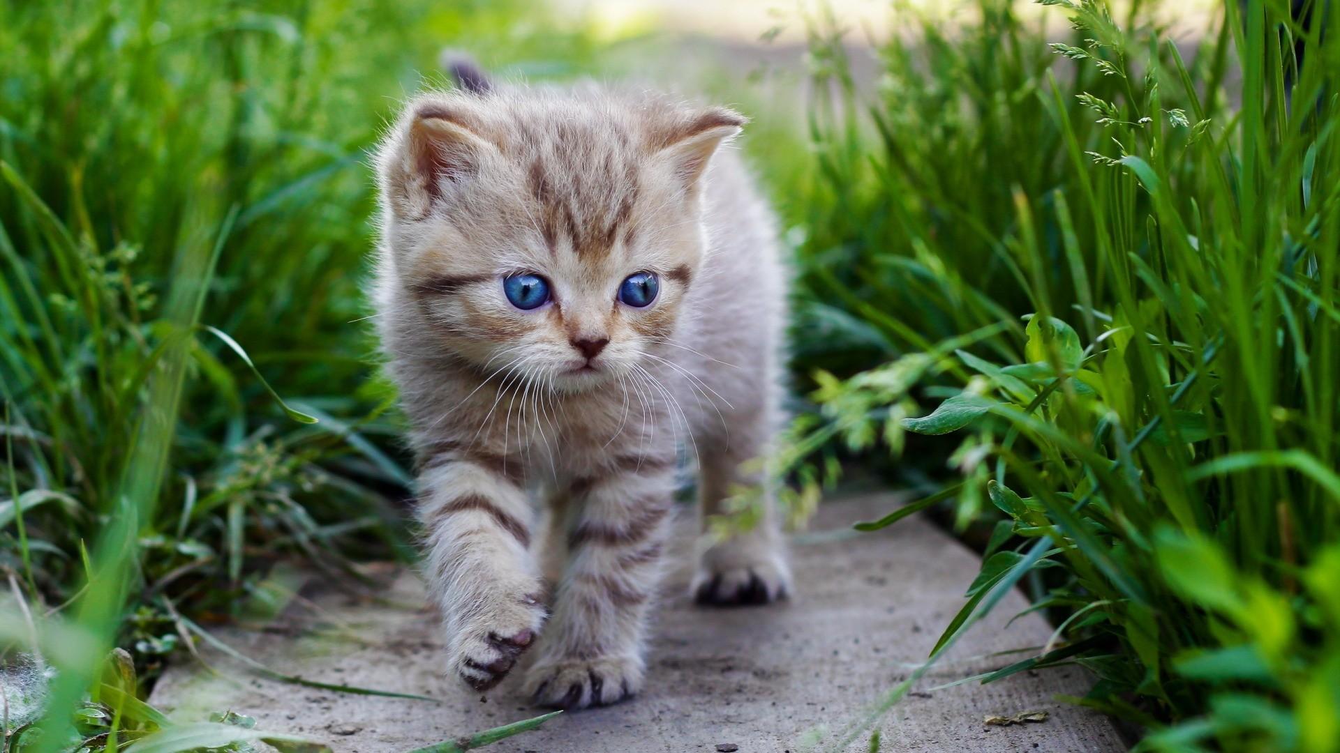 Animals___Cats_Blue-eyed_kitten_is_among_the_grass_097587_.jpg