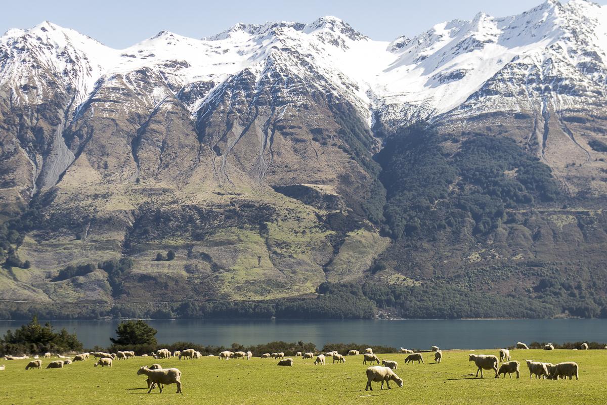 120916_New Zealand_0326.JPG