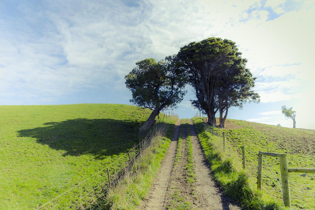 120916_New Zealand_0532.JPG