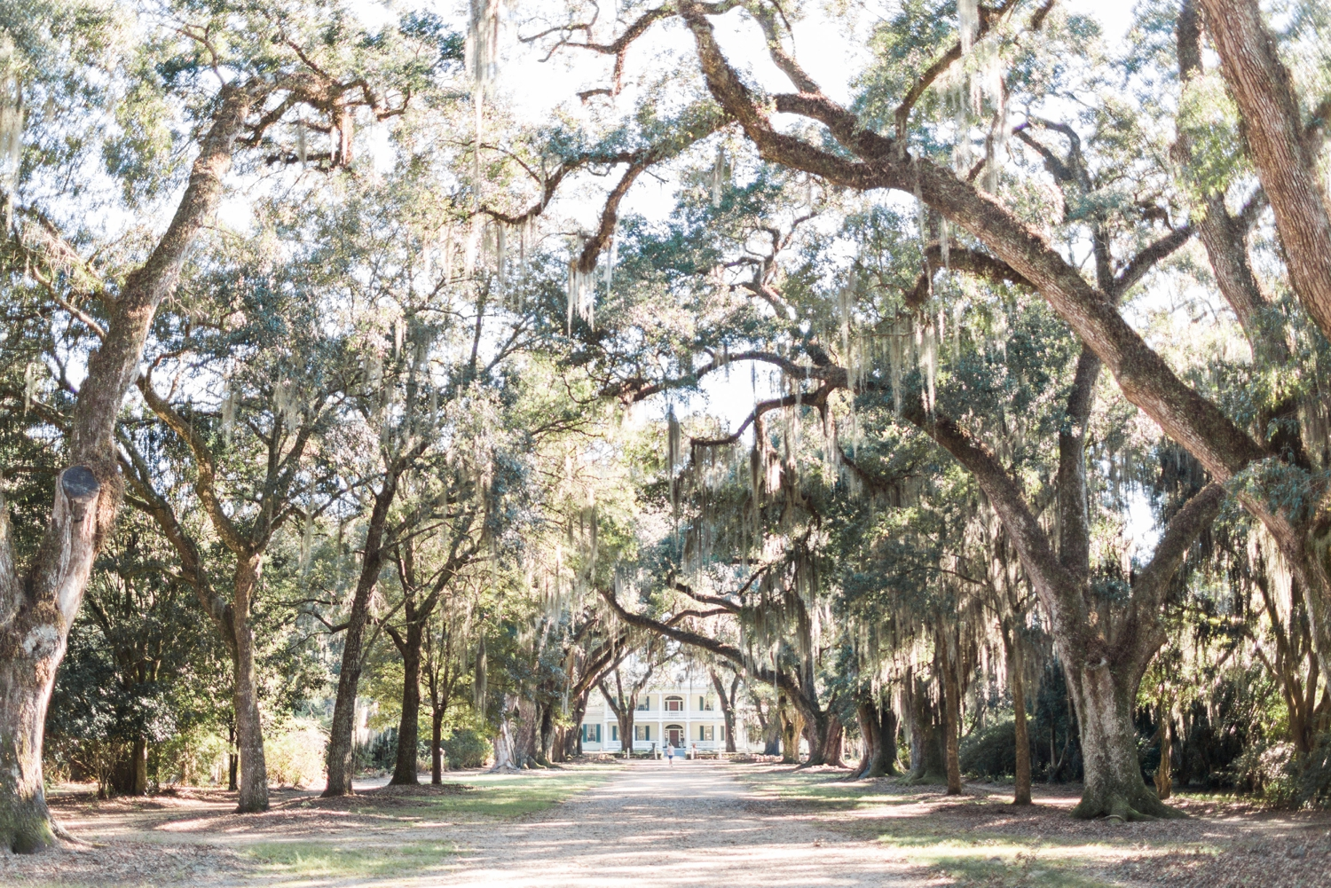 rosedown-plantation-new-orleans-destination-wedding-photographer_9663.jpg