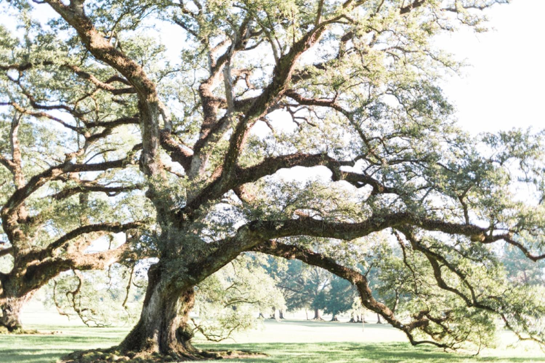 oak-alley-plantation-new-orleans-destination-wedding-photographer_9685.jpg