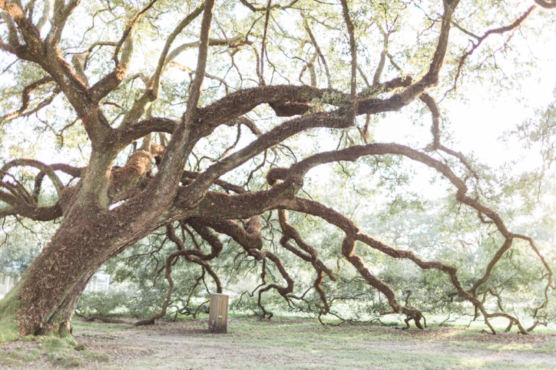 oak-alley-plantation-new-orleans-destination-wedding-photographer_9693.jpg