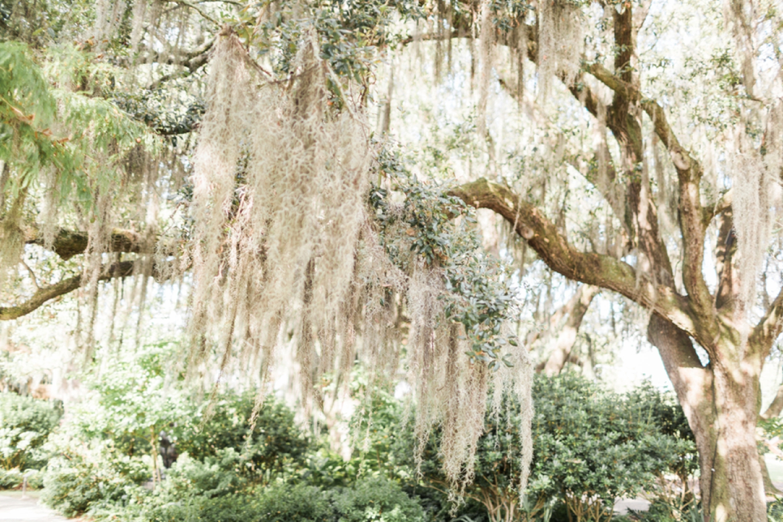 city-park-new-orleans-destination-wedding-photographer_9751.jpg