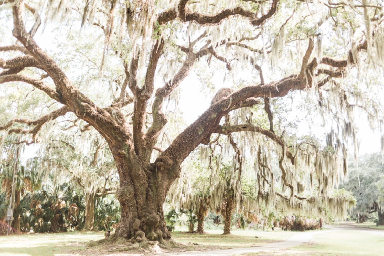 city-park-new-orleans-destination-wedding-photographer_9759.jpg