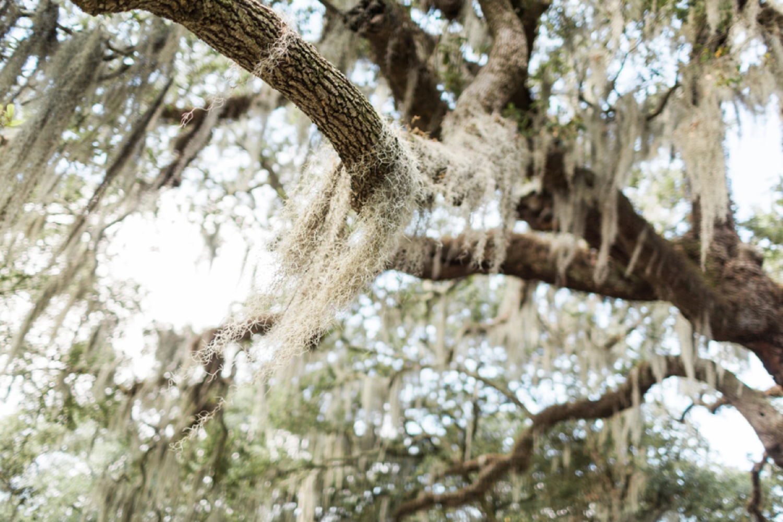 city-park-new-orleans-destination-wedding-photographer_9761.jpg