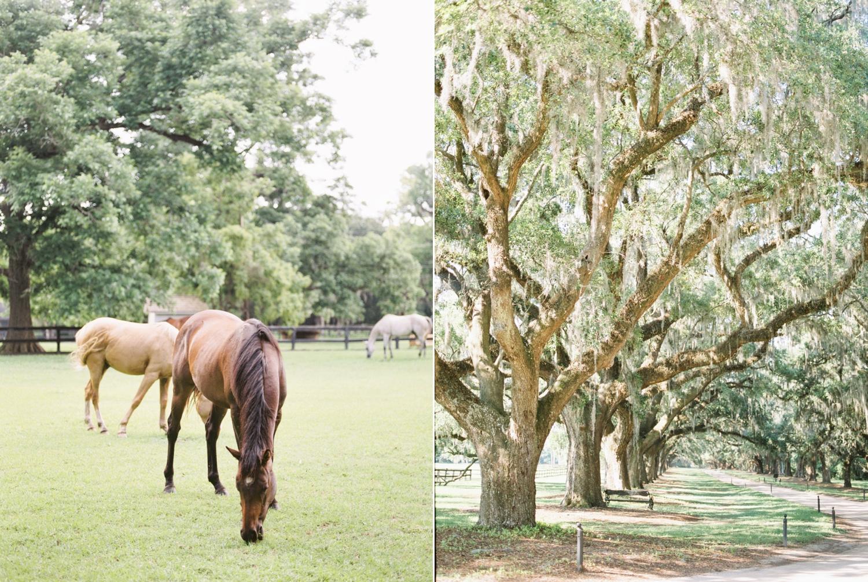 Charleston-South-Carolina-Wedding-Photographer-Destination-Wedding-Photography_5194.jpg