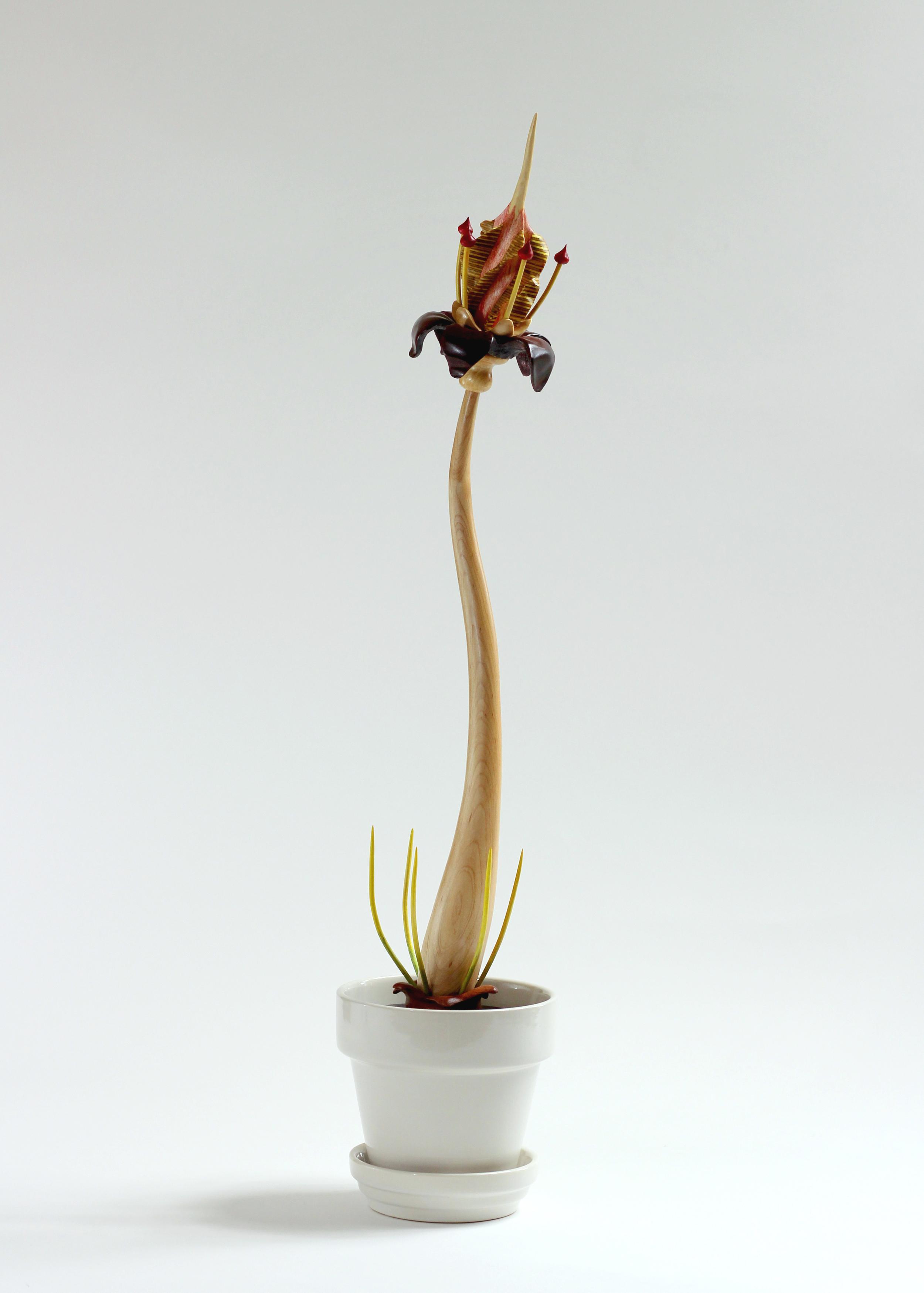 Bloom #1 by Sam Hingston