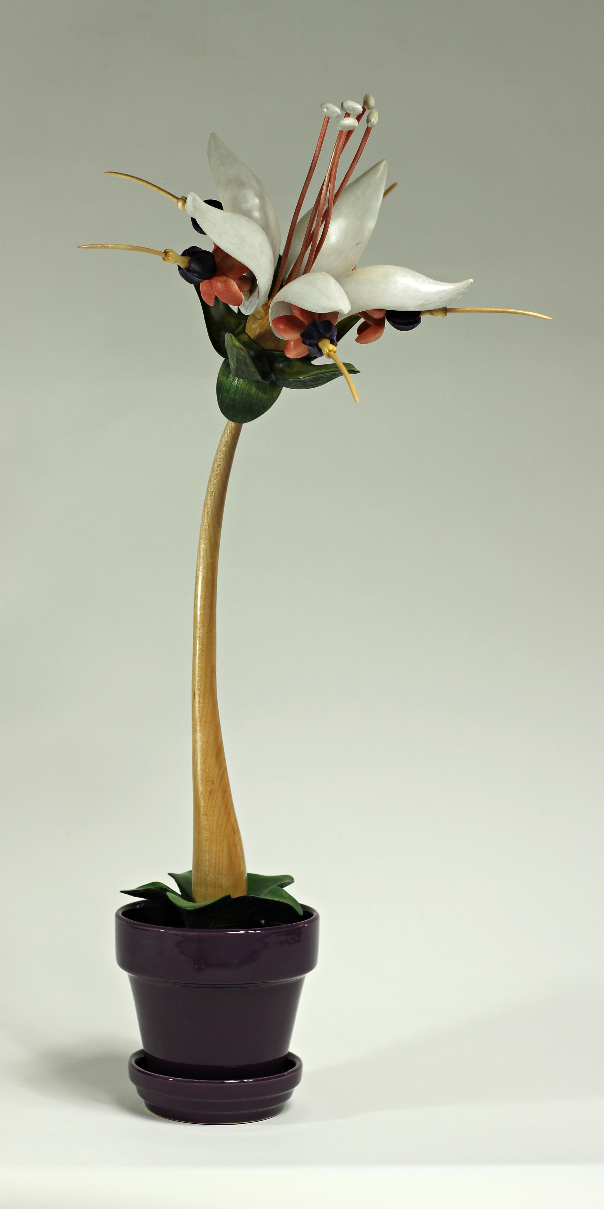 Bloom #16 by Sam Hingston