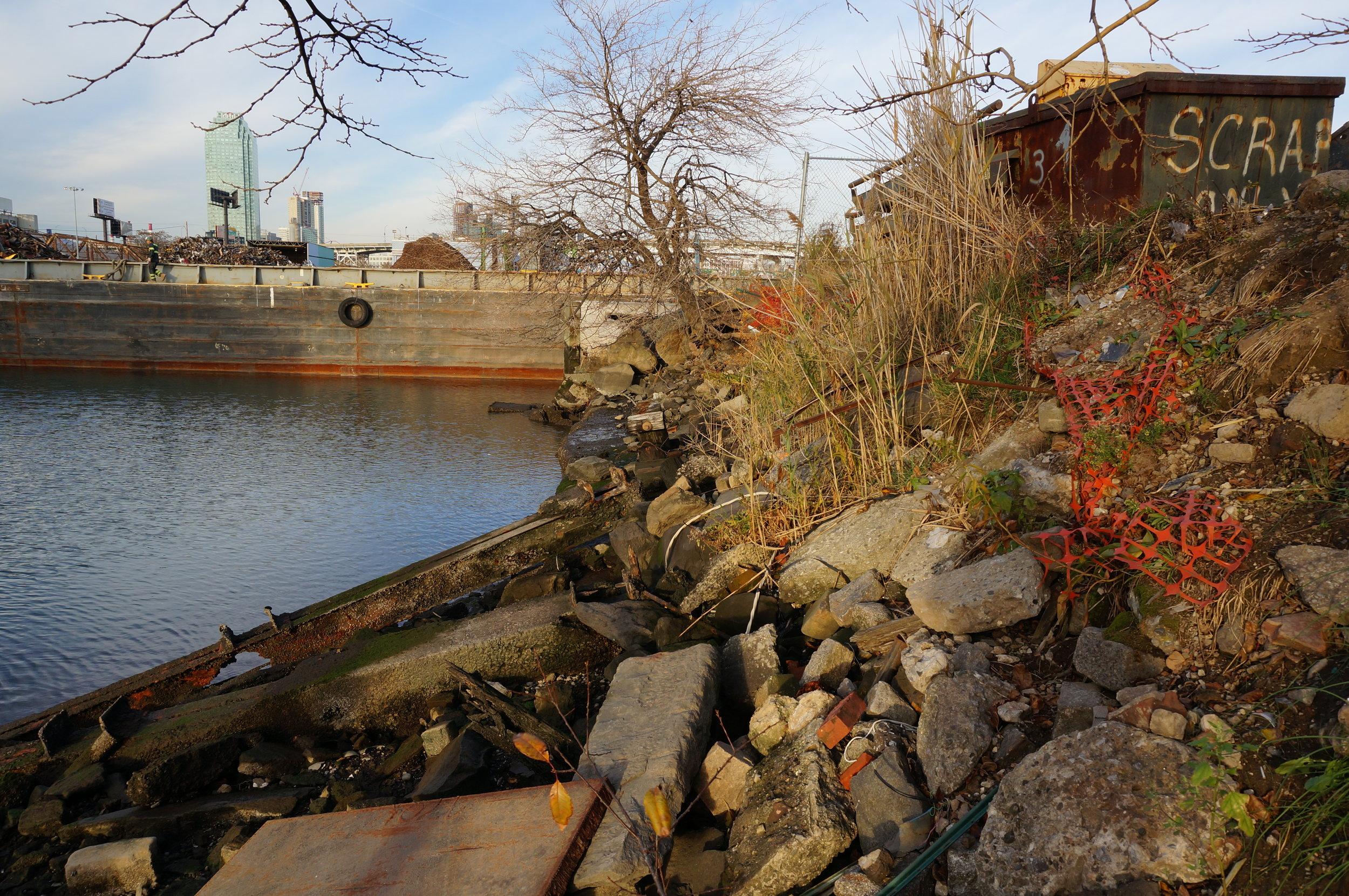 debris at shoreline.jpg