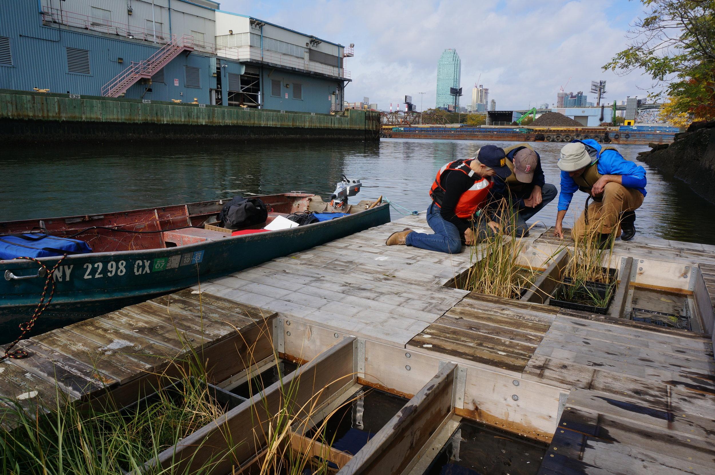 living dock sampling.jpg