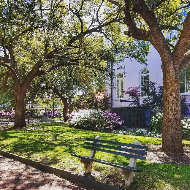 Great pic of Washington Square Park by guide Kristin Halvorson.  #1670tours