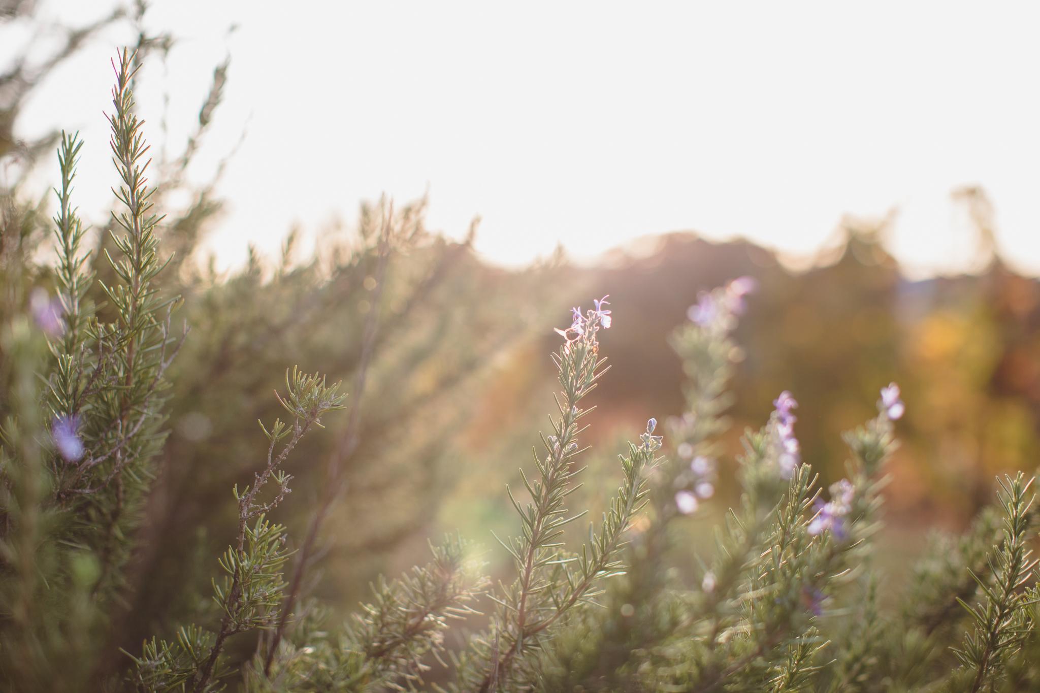 Napaflowers.jpg