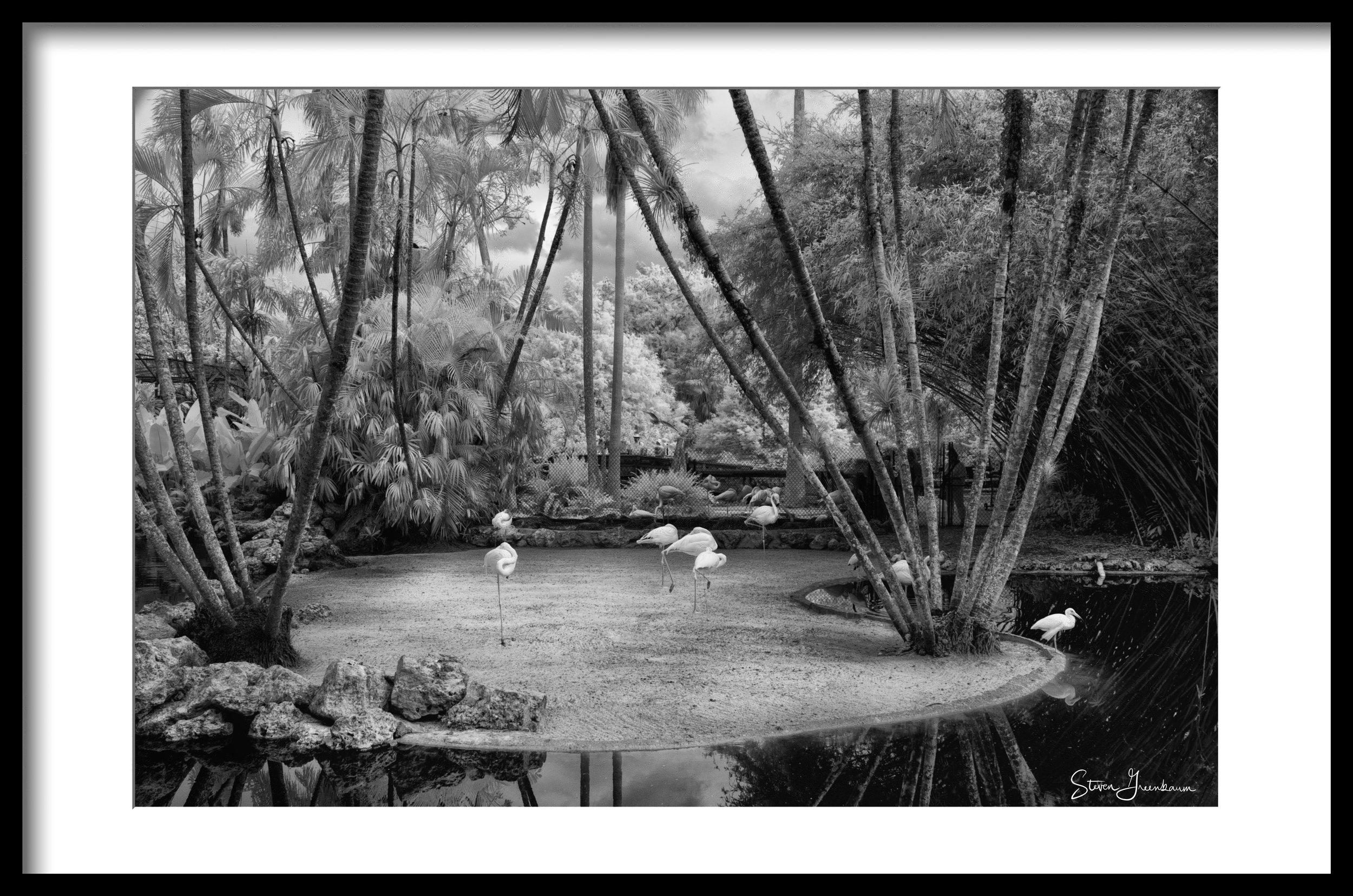 Flamingo Gardens, Davie, FL (infrared) 2018
