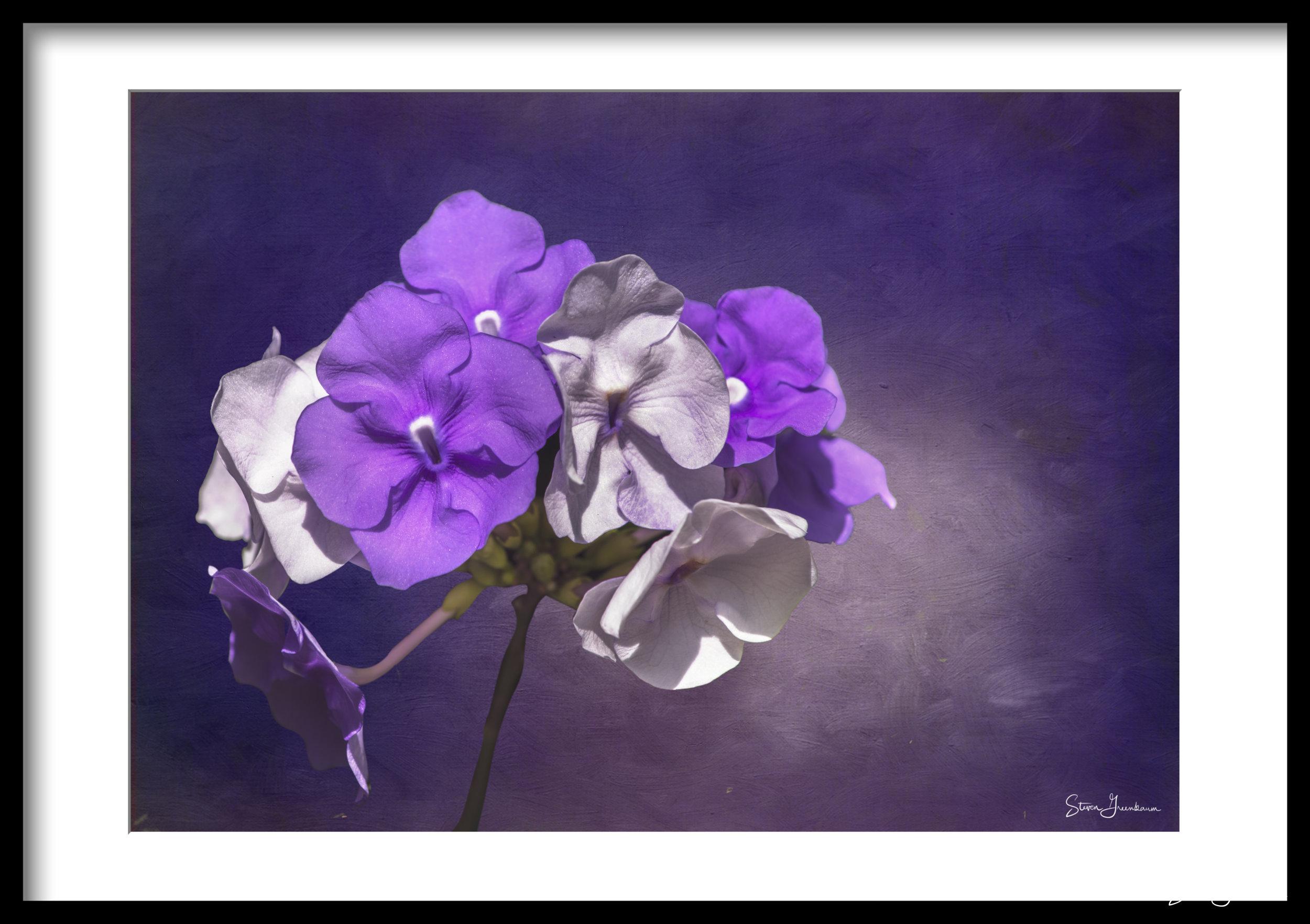 20140101_fairchild_0048-with background.jpg