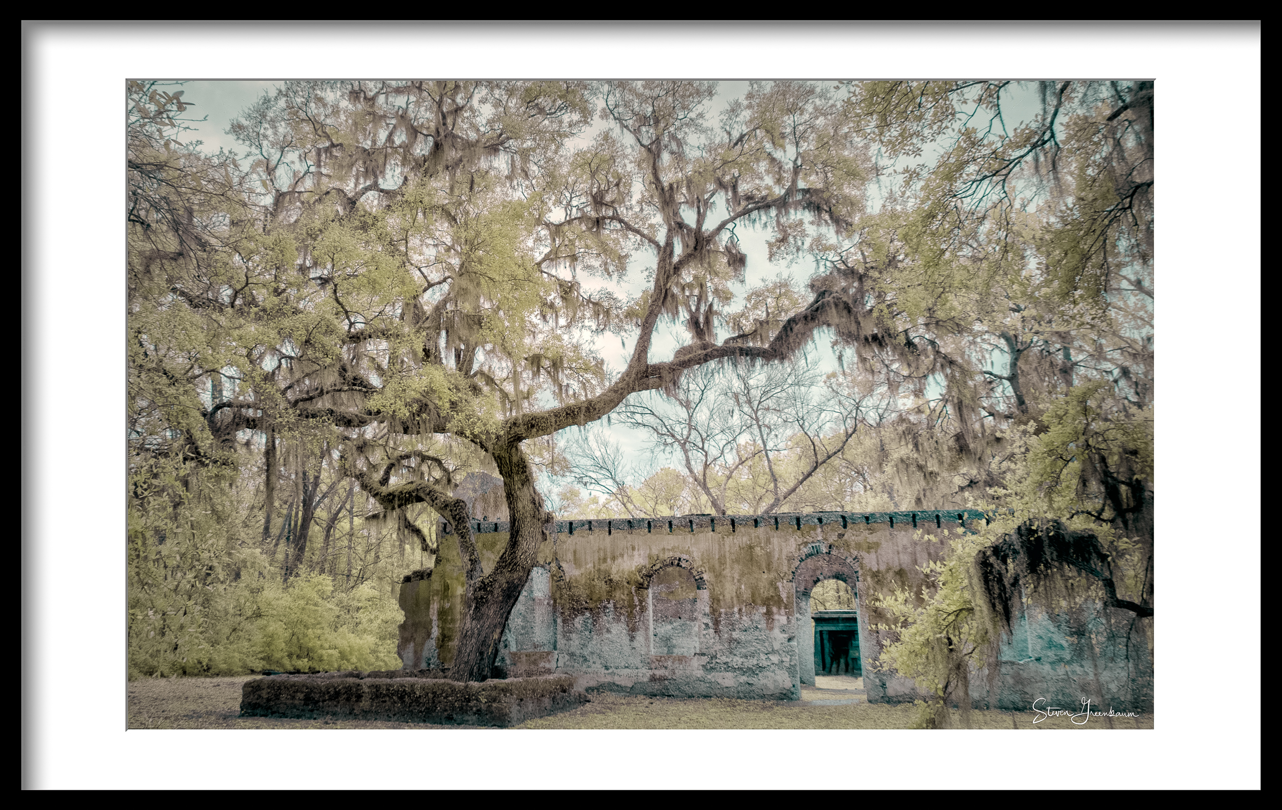 Live Oak at St. Helena Chapel Of Ease, South Carolina,2017